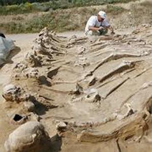 Massengrab aus Dreißigjährigem Krieg entdeckt